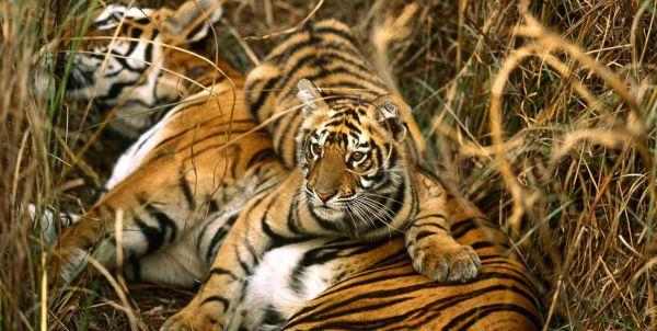 Sundarbans-National-Park.jpg