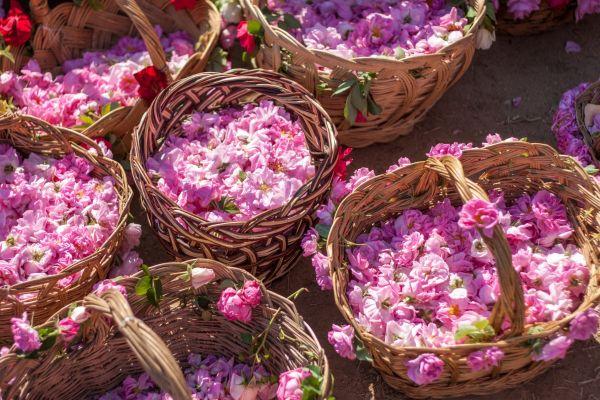 Bulgarian pink roses.jpg