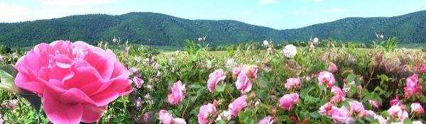dolinana rozite.jpg