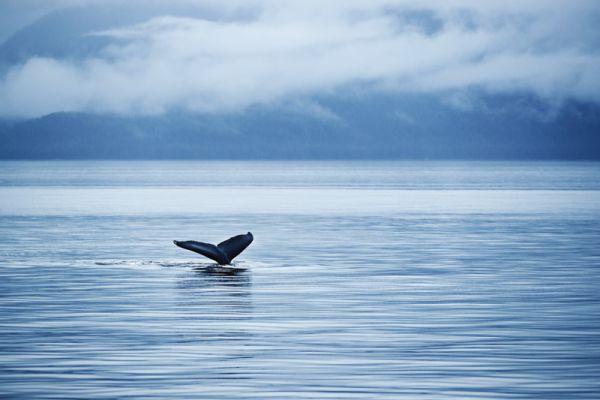 RU_2016_0904_PN_Glacier_Explorer_Whale_Tail_Alaska_5165_CvD_CMYK.jpg
